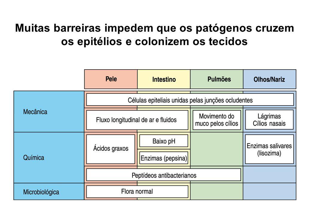 Muitas barreiras impedem que os patógenos cruzem os epitélios e colonizem os tecidos