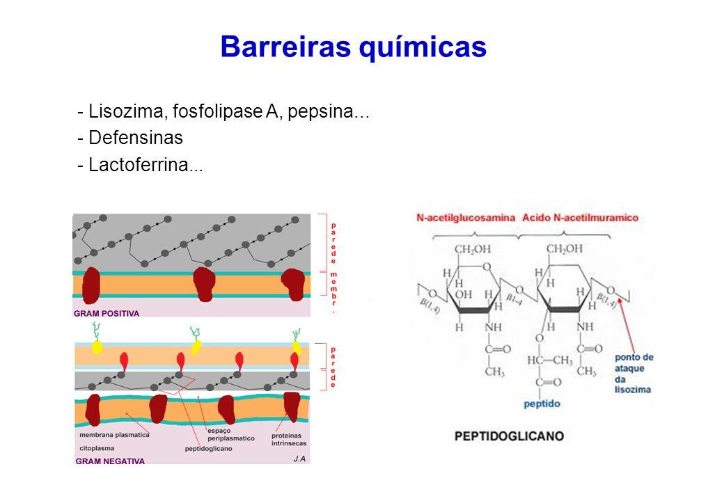 Barreiras químicas - Lisozima, fosfolipase A, pepsina... - Defensinas - Lactoferrina...