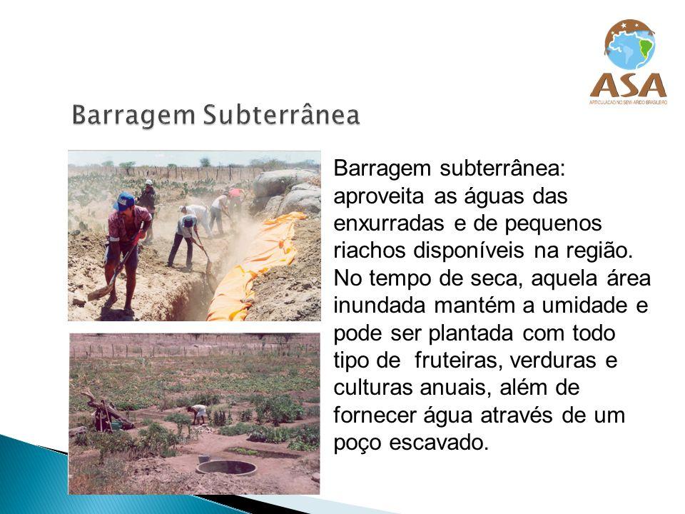 Barragem subterrânea: aproveita as águas das enxurradas e de pequenos riachos disponíveis na região. No tempo de seca, aquela área inundada mantém a u