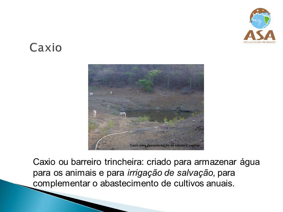 Caxio ou barreiro trincheira: criado para armazenar água para os animais e para irrigação de salvação, para complementar o abastecimento de cultivos a