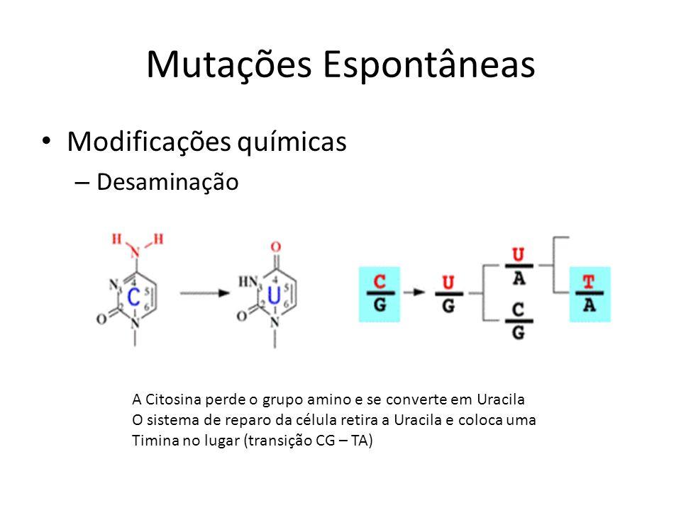 Modificações químicas – Desaminação Mutações Espontâneas A Citosina perde o grupo amino e se converte em Uracila O sistema de reparo da célula retira