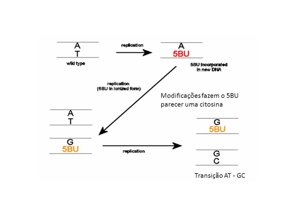 Modificações fazem o 5BU parecer uma citosina Transição AT - GC