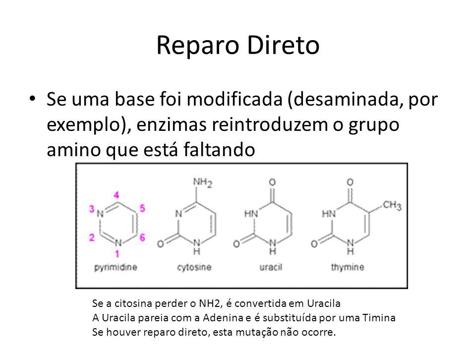 Reparo Direto Se uma base foi modificada (desaminada, por exemplo), enzimas reintroduzem o grupo amino que está faltando Se a citosina perder o NH2, é