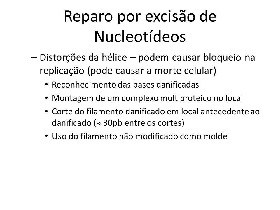 Reparo por excisão de Nucleotídeos – Distorções da hélice – podem causar bloqueio na replicação (pode causar a morte celular) Reconhecimento das bases