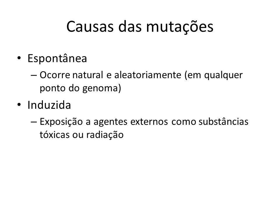 Consequências das mutações As mutações podem ocorrer em qualquer ponto do DNA.