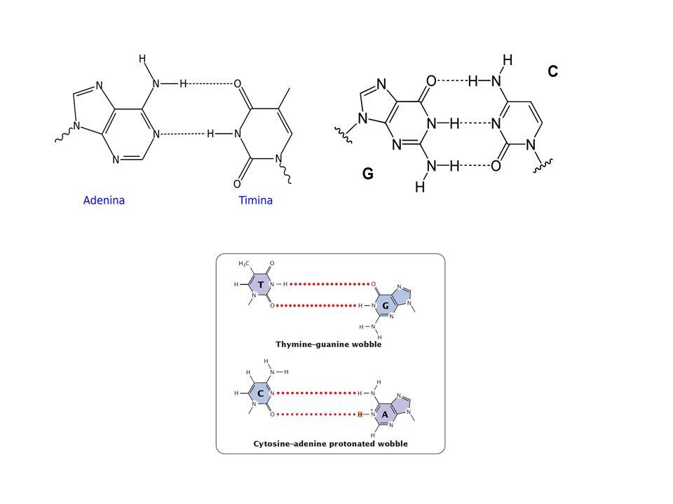 Outras classificações das mutações Neutras Funcionais