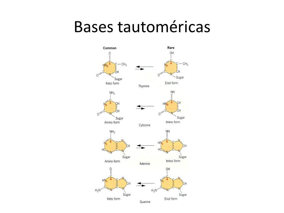 Mutação sinônima Ocorre quando um aminoácido é substituído por outro, que tem propriedades parecidas e não altera, ou altera muito pouco a função da proteína