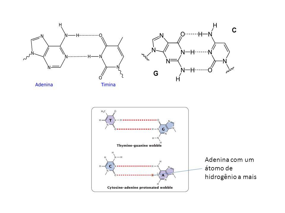 Mutação de sentido trocado Altera o aminoácido e altera a proteína – Fenilcetonúria – Substituição do par CG para o par AT na posição 408 do mRNA, modificando o códon CGG (arginina) para UGG (triptofano) – Causa a inativação da enzima