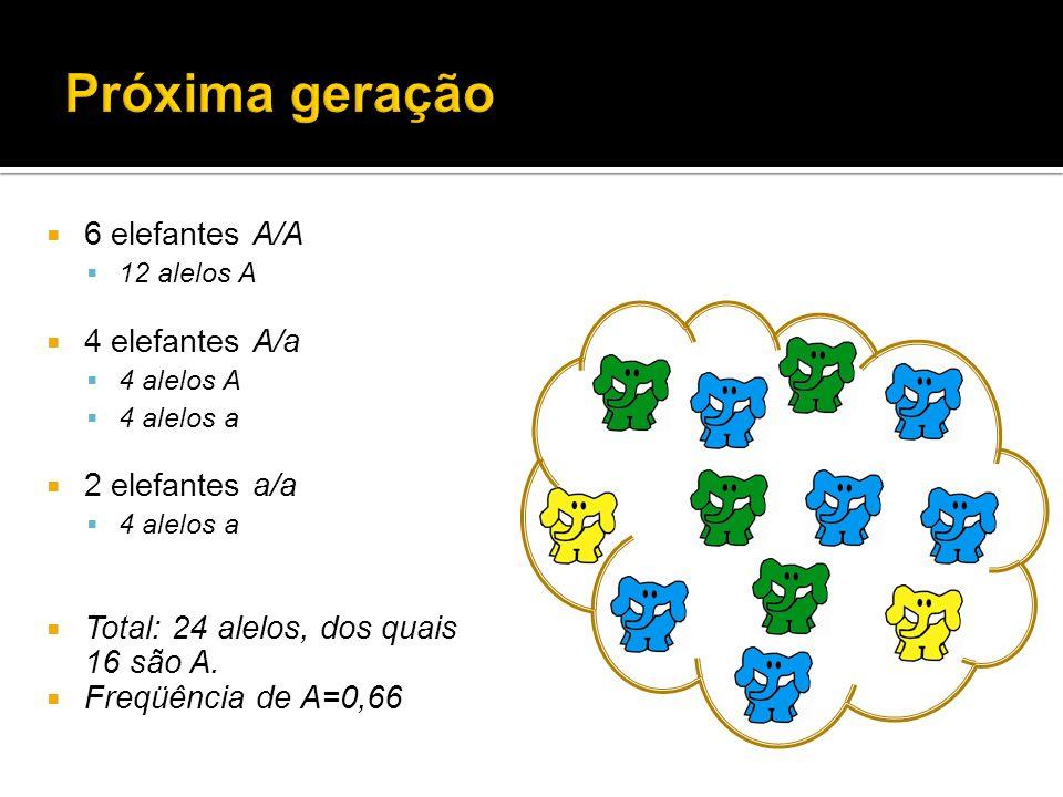 6 elefantes A/A 12 alelos A 4 elefantes A/a 4 alelos A 4 alelos a 2 elefantes a/a 4 alelos a Total: 24 alelos, dos quais 16 são A. Freqüência de A=0,6