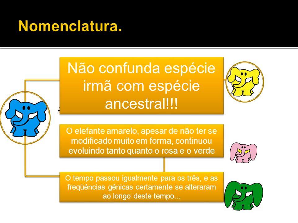 Ancestral Extinto! Não confunda espécie irmã com espécie ancestral!!! O elefante amarelo, apesar de não ter se modificado muito em forma, continuou ev