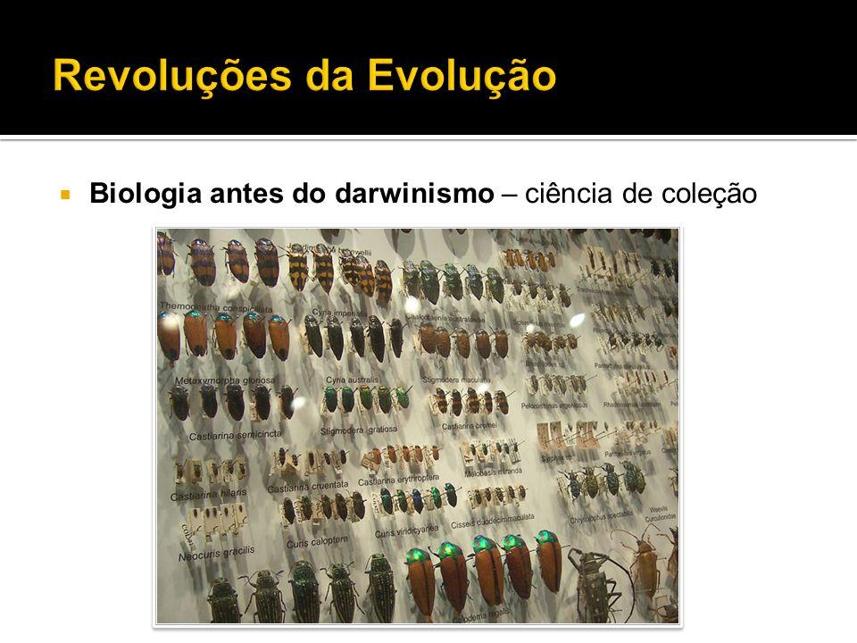 Biologia antes do darwinismo – ciência de coleção