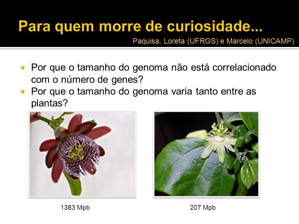 Por que o tamanho do genoma não está correlacionado com o número de genes? Por que o tamanho do genoma varia tanto entre as plantas? 1383 Mpb207 Mpb P