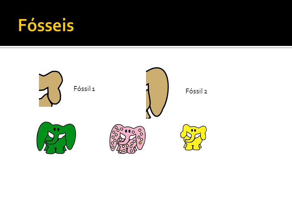 Fóssil 1 Fóssil 2