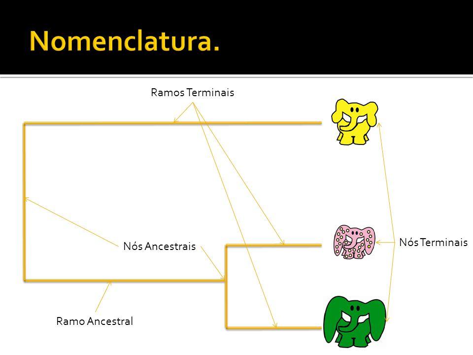Nós Terminais Nós Ancestrais Ramos Terminais Ramo Ancestral