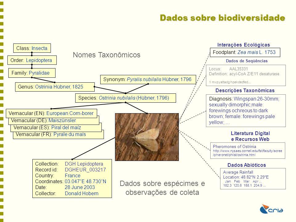 Dados sobre biodiversidade Family: Pyralidae Order: Lepidoptera Class: Insecta Genus: Ostrinia Hübner, 1825 Vernacular (FR): Pyrale du maïs Vernacular