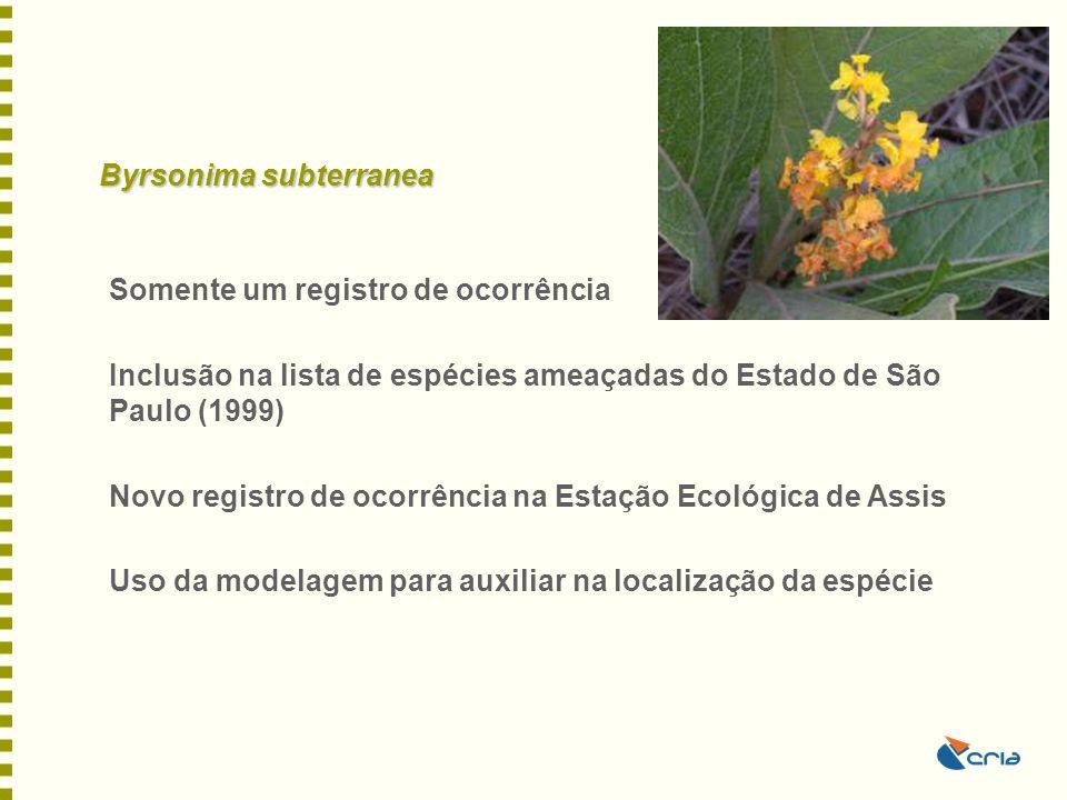 Byrsonima subterranea Somente um registro de ocorrência Inclusão na lista de espécies ameaçadas do Estado de São Paulo (1999) Novo registro de ocorrên