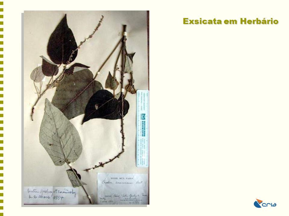 Exsicata em Herbário