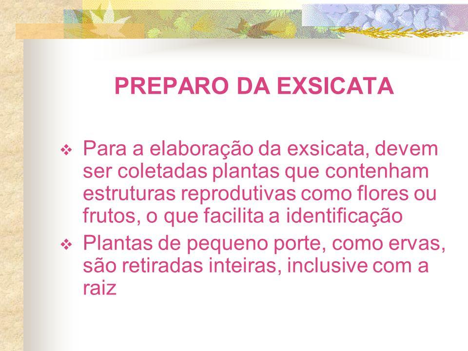 PREPARO DA EXSICATA Para a elaboração da exsicata, devem ser coletadas plantas que contenham estruturas reprodutivas como flores ou frutos, o que faci