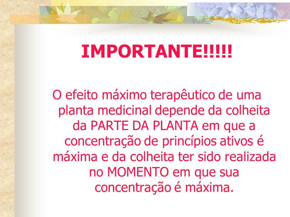 IMPORTANTE!!!!! O efeito máximo terapêutico de uma planta medicinal depende da colheita da PARTE DA PLANTA em que a concentração de princípios ativos