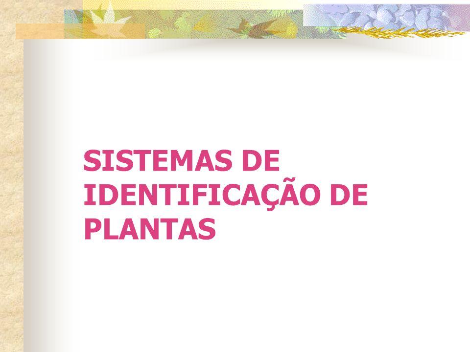 HERBORIZAÇÃO Processo de preparação do material coletado para ser preservado em uma coleção de plantas chamada HERBÁRIO
