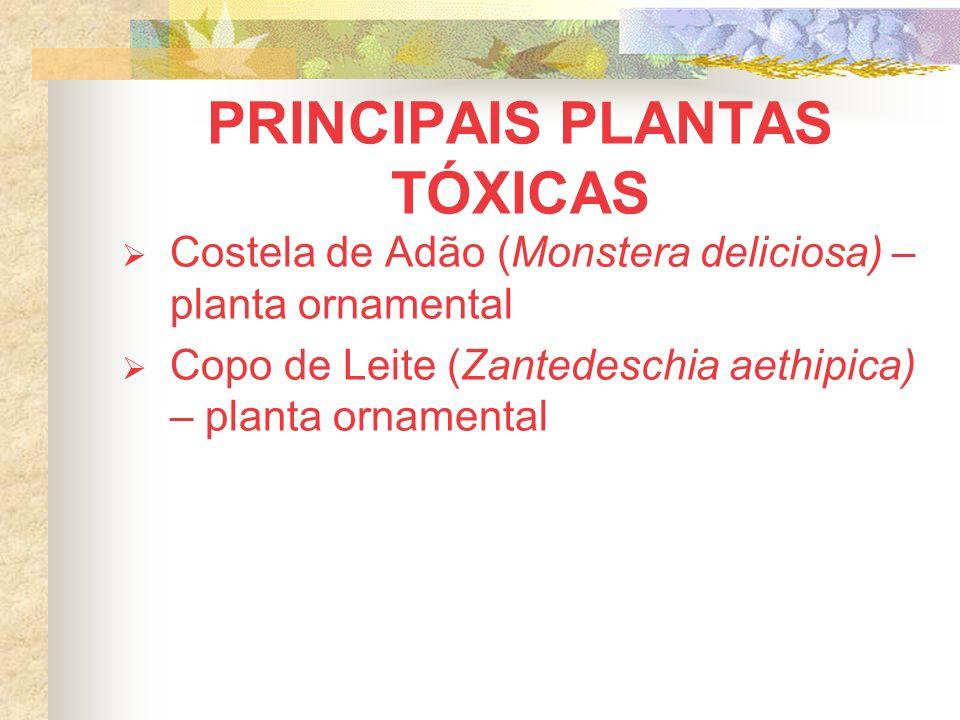 PRINCIPAIS PLANTAS TÓXICAS Costela de Adão (Monstera deliciosa) – planta ornamental Copo de Leite (Zantedeschia aethipica) – planta ornamental