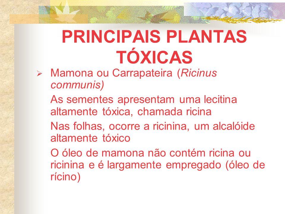 PRINCIPAIS PLANTAS TÓXICAS Mamona ou Carrapateira (Ricinus communis) As sementes apresentam uma lecitina altamente tóxica, chamada ricina Nas folhas, ocorre a ricinina, um alcalóide altamente tóxico O óleo de mamona não contém ricina ou ricinina e é largamente empregado (óleo de rícino)