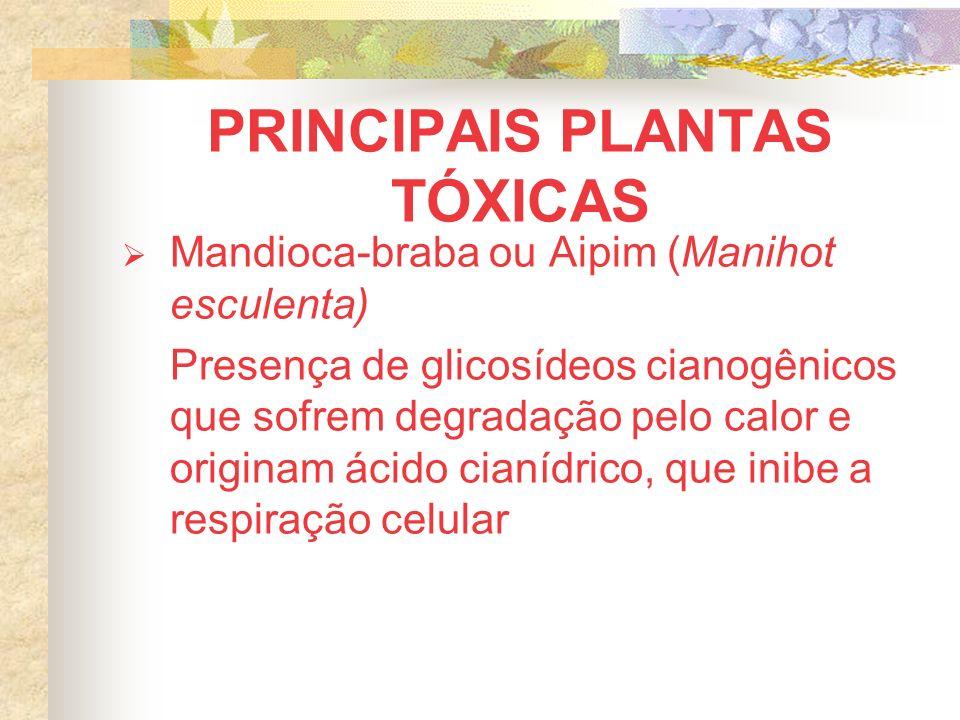 Mandioca-braba ou Aipim (Manihot esculenta) Presença de glicosídeos cianogênicos que sofrem degradação pelo calor e originam ácido cianídrico, que inibe a respiração celular
