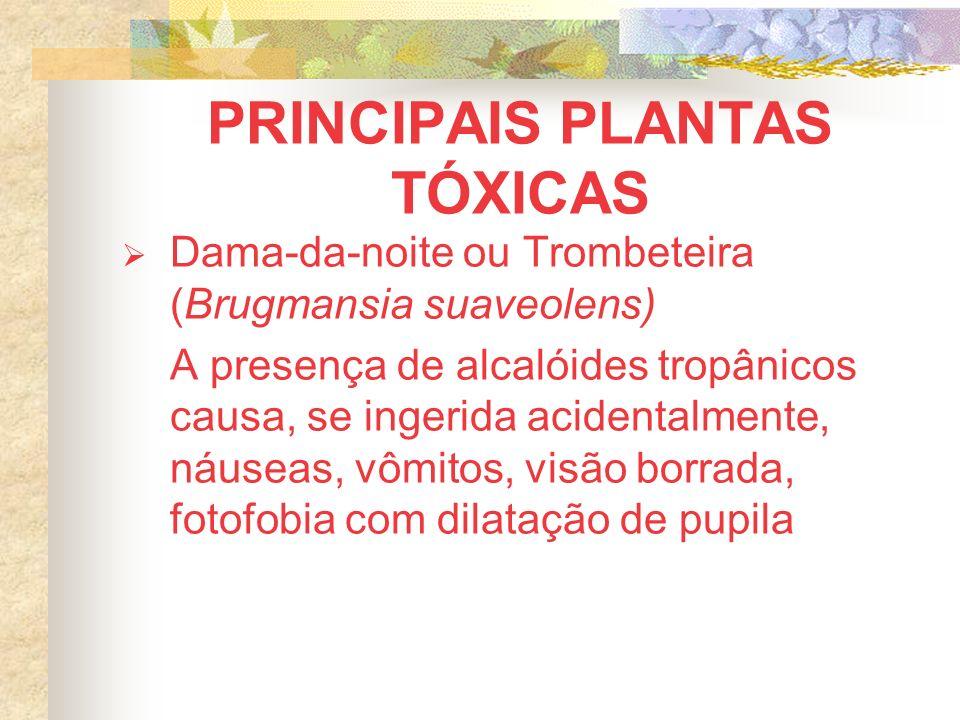 PRINCIPAIS PLANTAS TÓXICAS Dama-da-noite ou Trombeteira (Brugmansia suaveolens) A presença de alcalóides tropânicos causa, se ingerida acidentalmente, náuseas, vômitos, visão borrada, fotofobia com dilatação de pupila