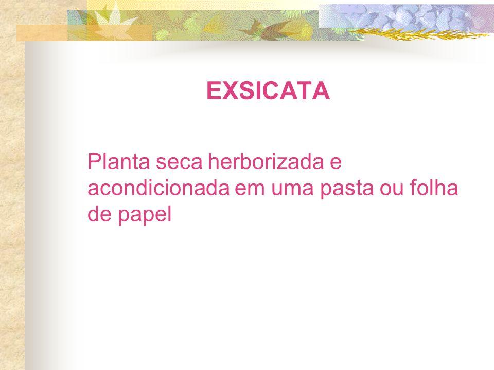 EXSICATA Planta seca herborizada e acondicionada em uma pasta ou folha de papel