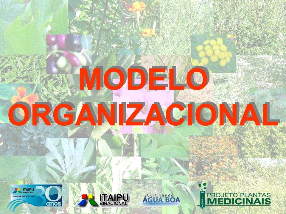 MODELO ORGANIZACIONAL MODELO ORGANIZACIONAL