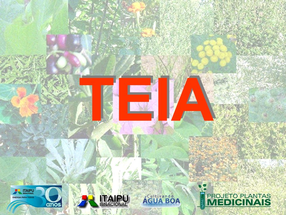 Técnicos da Agricultura Orgânica e Biodinâmica Técnicos da Agricultura Orgânica e Biodinâmica AgricultoresFamiliaresAgricultoresFamiliares Sub-comitêsSub-comitês AlunosAlunos Agentes da Saúde Saúde ProfessoresProfessores ComitêGestorComitêGestor