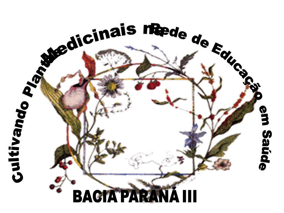 USO TERAPÊUTICO DE PLANTAS MEDICINAIS ALERGIAS Princípios ativos: Óleo essencial (amarelo), Carotenóides, Mucilagens, Flavonóides, Resinas, Vitamina C, Saponinas, Glicosídeos, Fitosterina e Taninos.