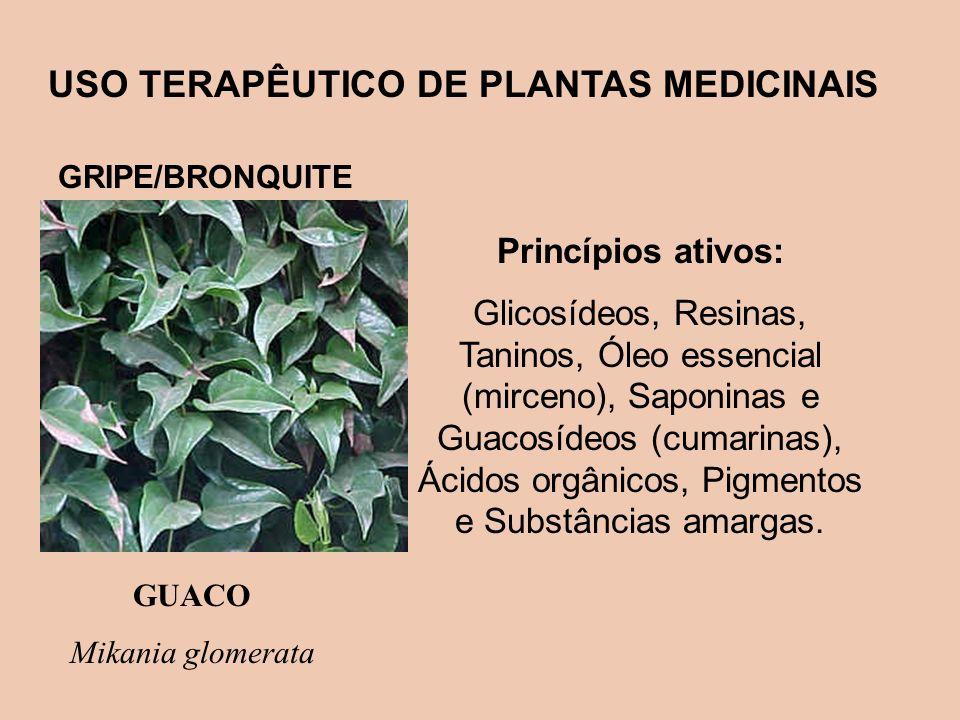 USO TERAPÊUTICO DE PLANTAS MEDICINAIS GRIPE/BRONQUITE GUACO Mikania glomerata Princípios ativos: Glicosídeos, Resinas, Taninos, Óleo essencial (mircen