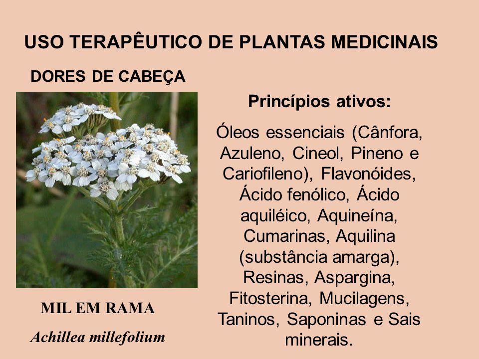 USO TERAPÊUTICO DE PLANTAS MEDICINAIS Princípios ativos: Óleos essenciais (Cânfora, Azuleno, Cineol, Pineno e Cariofileno), Flavonóides, Ácido fenólic