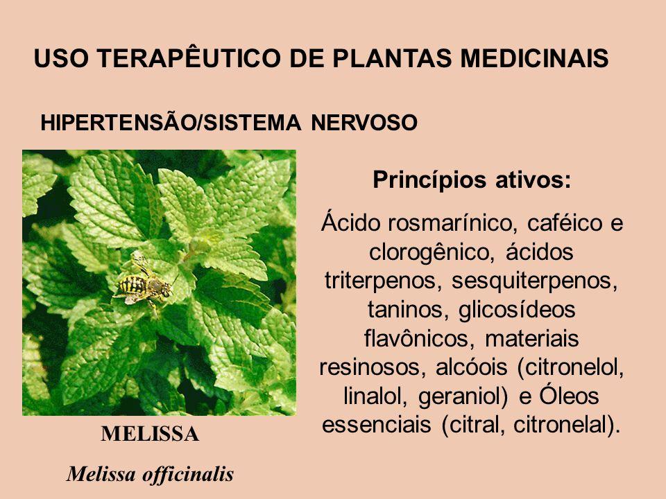 USO TERAPÊUTICO DE PLANTAS MEDICINAIS HIPERTENSÃO/SISTEMA NERVOSO Princípios ativos: Ácido rosmarínico, caféico e clorogênico, ácidos triterpenos, ses