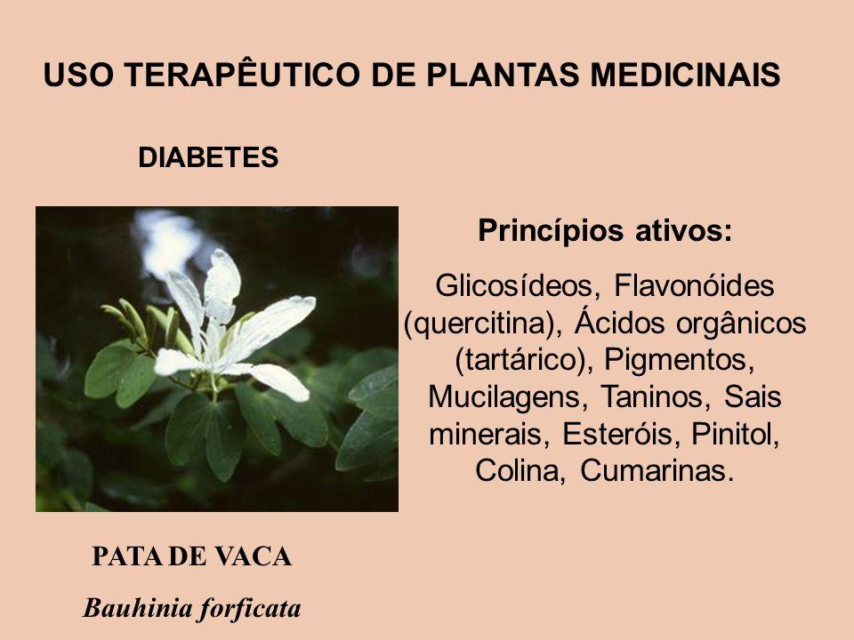 USO TERAPÊUTICO DE PLANTAS MEDICINAIS DIABETES Princípios ativos: Glicosídeos, Flavonóides (quercitina), Ácidos orgânicos (tartárico), Pigmentos, Muci