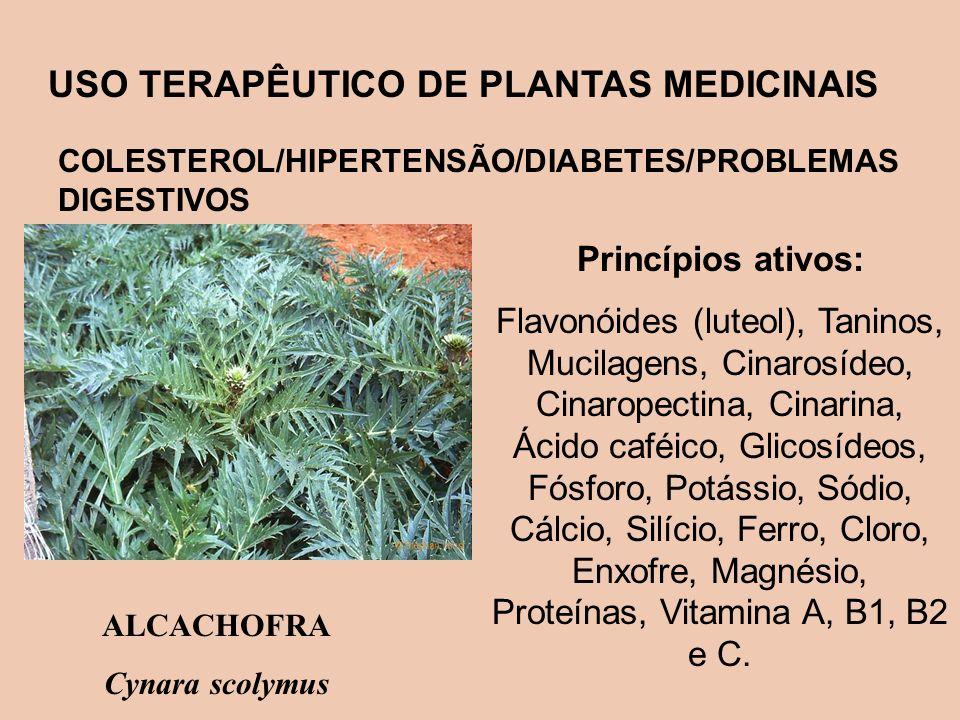 USO TERAPÊUTICO DE PLANTAS MEDICINAIS COLESTEROL/HIPERTENSÃO/DIABETES/PROBLEMAS DIGESTIVOS Princípios ativos: Flavonóides (luteol), Taninos, Mucilagen