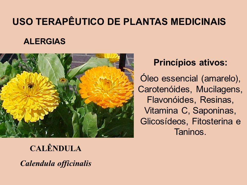 USO TERAPÊUTICO DE PLANTAS MEDICINAIS ALERGIAS Princípios ativos: Óleo essencial (amarelo), Carotenóides, Mucilagens, Flavonóides, Resinas, Vitamina C