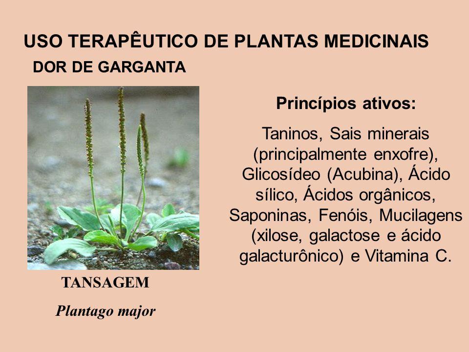 USO TERAPÊUTICO DE PLANTAS MEDICINAIS DOR DE GARGANTA Princípios ativos: Taninos, Sais minerais (principalmente enxofre), Glicosídeo (Acubina), Ácido