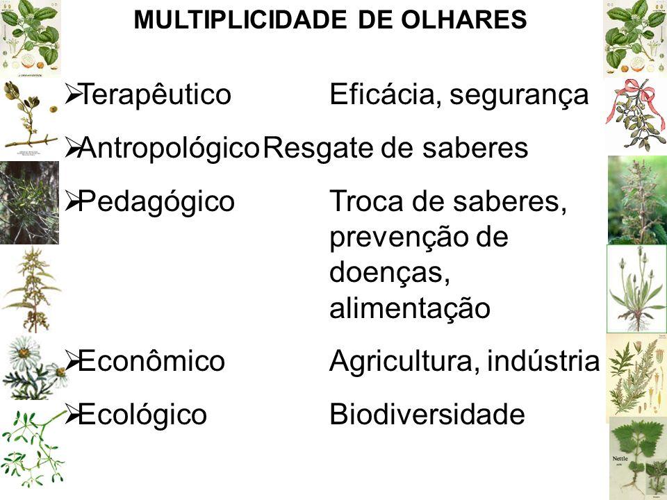 MULTIPLICIDADE DE OLHARES TerapêuticoEficácia, segurança AntropológicoResgate de saberes PedagógicoTroca de saberes, prevenção de doenças, alimentação