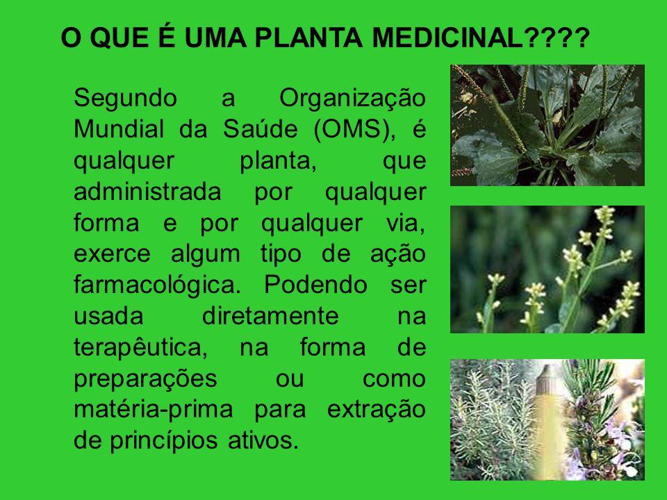 O QUE É UMA PLANTA MEDICINAL???? Segundo a Organização Mundial da Saúde (OMS), é qualquer planta, que administrada por qualquer forma e por qualquer v