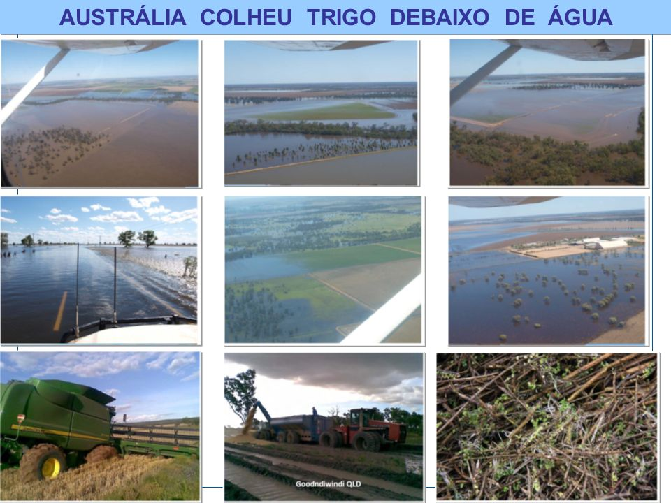AUSTRÁLIA COLHEU TRIGO DEBAIXO DE ÁGUA