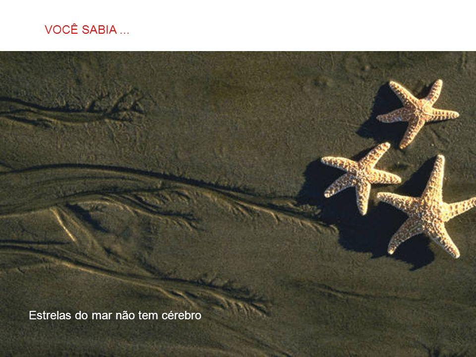 SABIAS QUE… Estrelas do mar não tem cérebro VOCÊ SABIA...