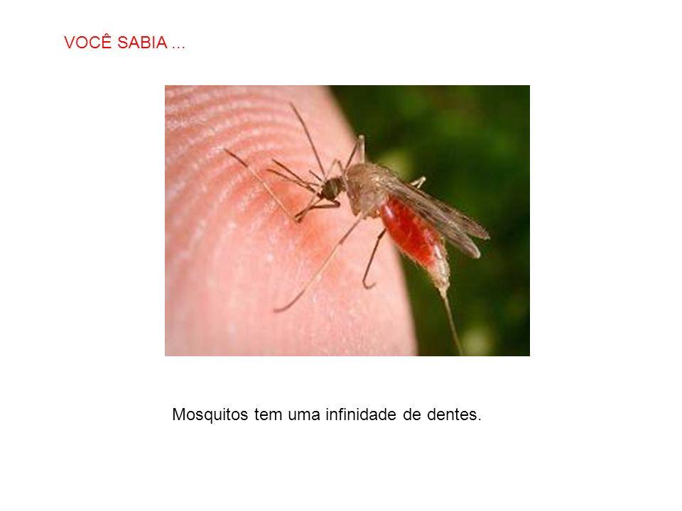 SABIAS QUE… Mosquitos tem uma infinidade de dentes. VOCÊ SABIA...