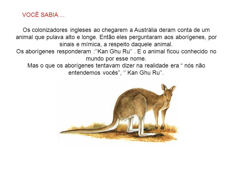 SABIAS QUE… Os colonizadores ingleses ao chegarem a Austrália deram conta de um animal que pulava alto e longe. Então eles perguntaram aos aborígenes,