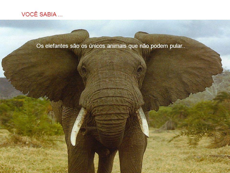 SABIAS QUE… Os elefantes são os únicos animais que não podem pular.. VOCÊ SABIA...