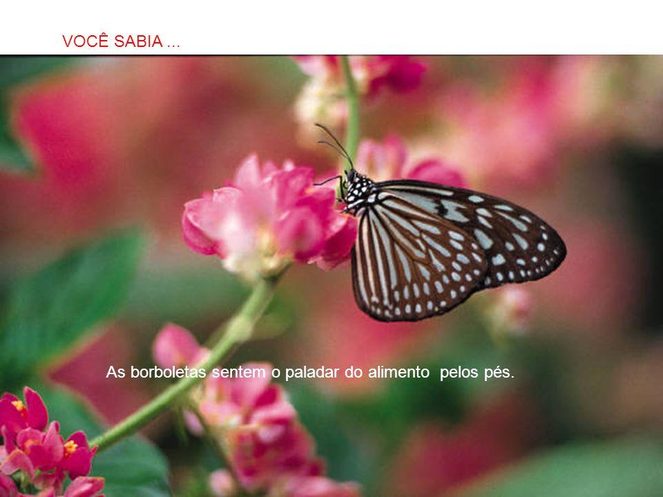 SABIAS QUE… As borboletas sentem o paladar do alimento pelos pés. VOCÊ SABIA...