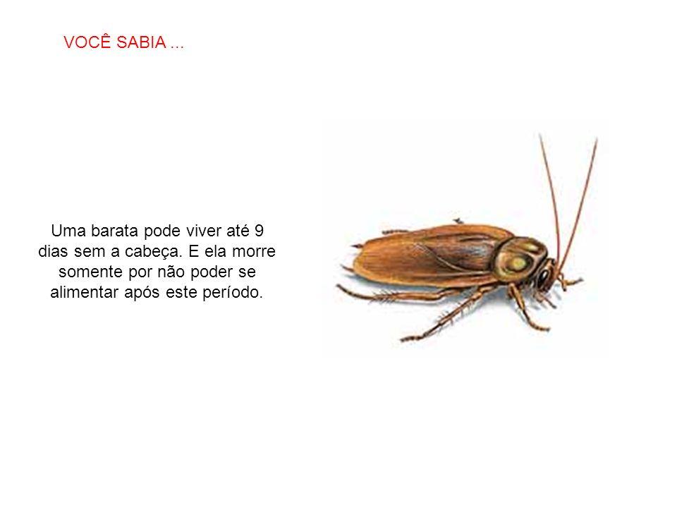 SABIAS QUE… Uma barata pode viver até 9 dias sem a cabeça. E ela morre somente por não poder se alimentar após este período. VOCÊ SABIA...