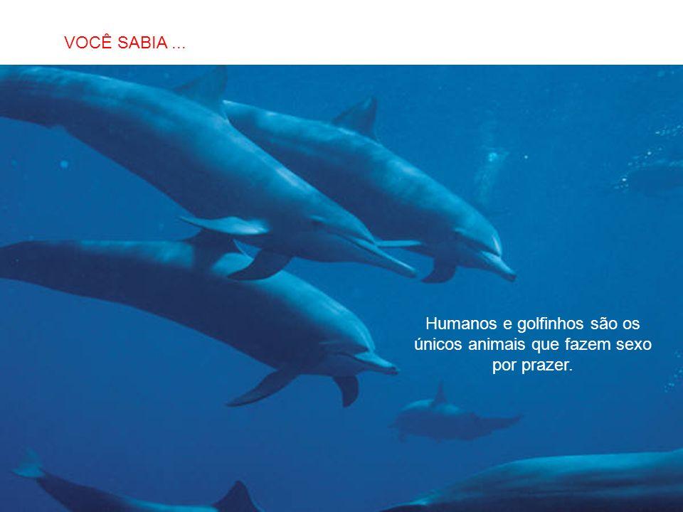 SABIAS QUE… Humanos e golfinhos são os únicos animais que fazem sexo por prazer. VOCÊ SABIA...