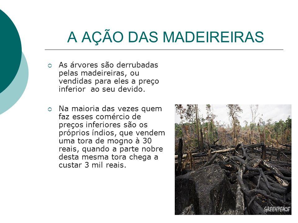 A AÇÃO DAS MADEIREIRAS As árvores são derrubadas pelas madeireiras, ou vendidas para eles a preço inferior ao seu devido.